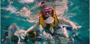Hình của Tour lặn biển- xem Muay Thai và xiếc khỉ Koh Tan