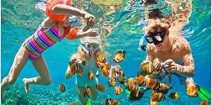 Hình của Tour lặn ngắm san hô Cù Lao Chàm - Bãi Ông 1 ngày
