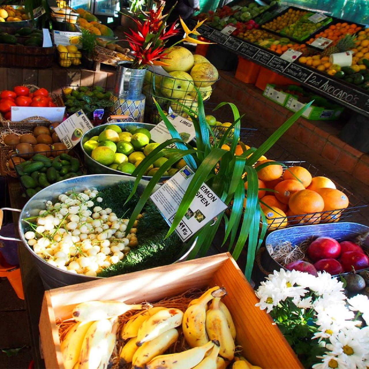 Byron Bay and Tropical Fruit World Tour