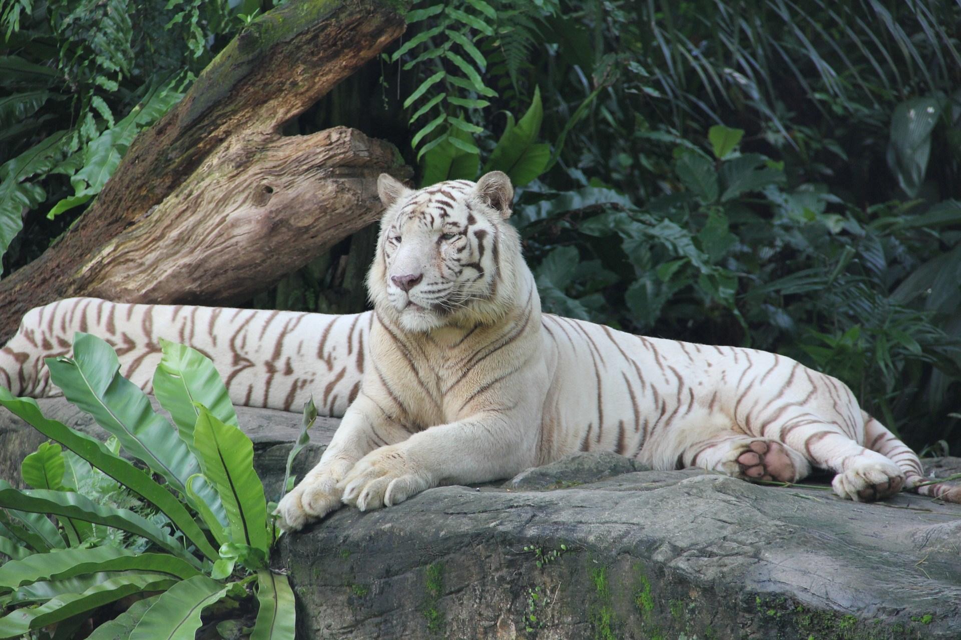 COMBO:  Vé tham quan Vườn thú Singapore và Rừng Nhiệt đới Rainforest Lumina