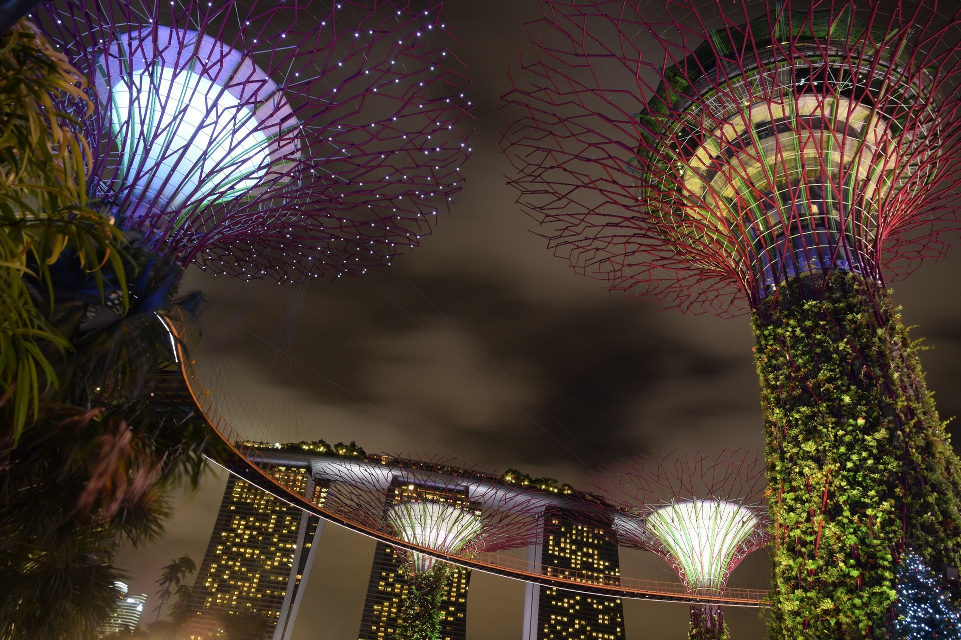 COMBO: Gardens by the Bay + Singapore Tourist Pass PLUS