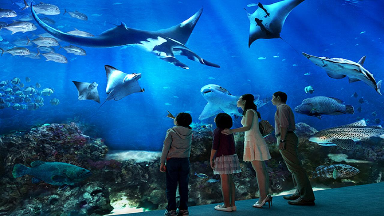 COMBO: S.E.A. Aquarium™ + Sentosa 4D Adventureland