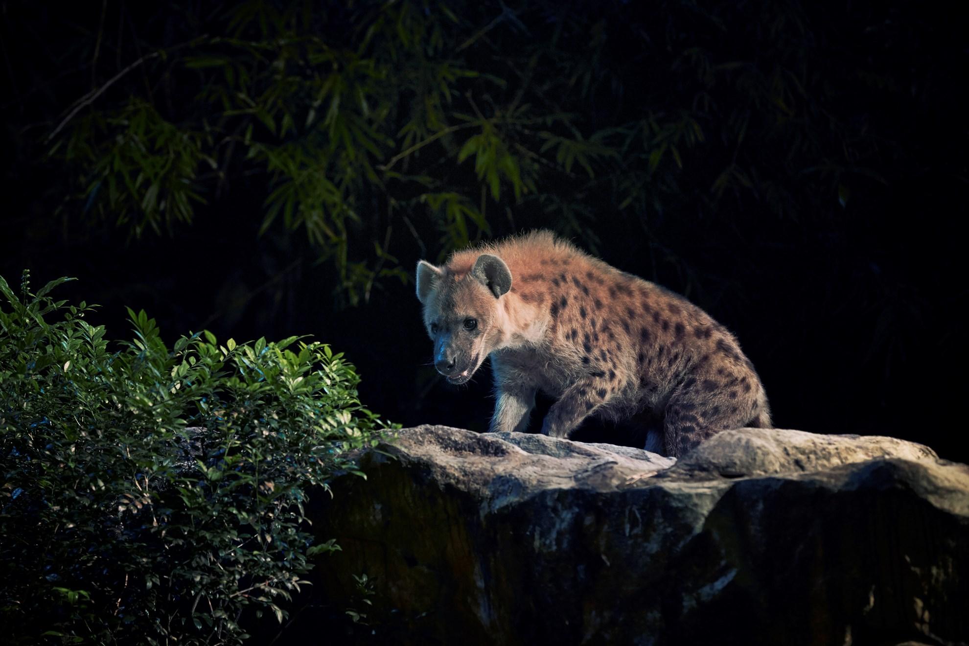 COMBO: Singapore Night Safari + River Safari