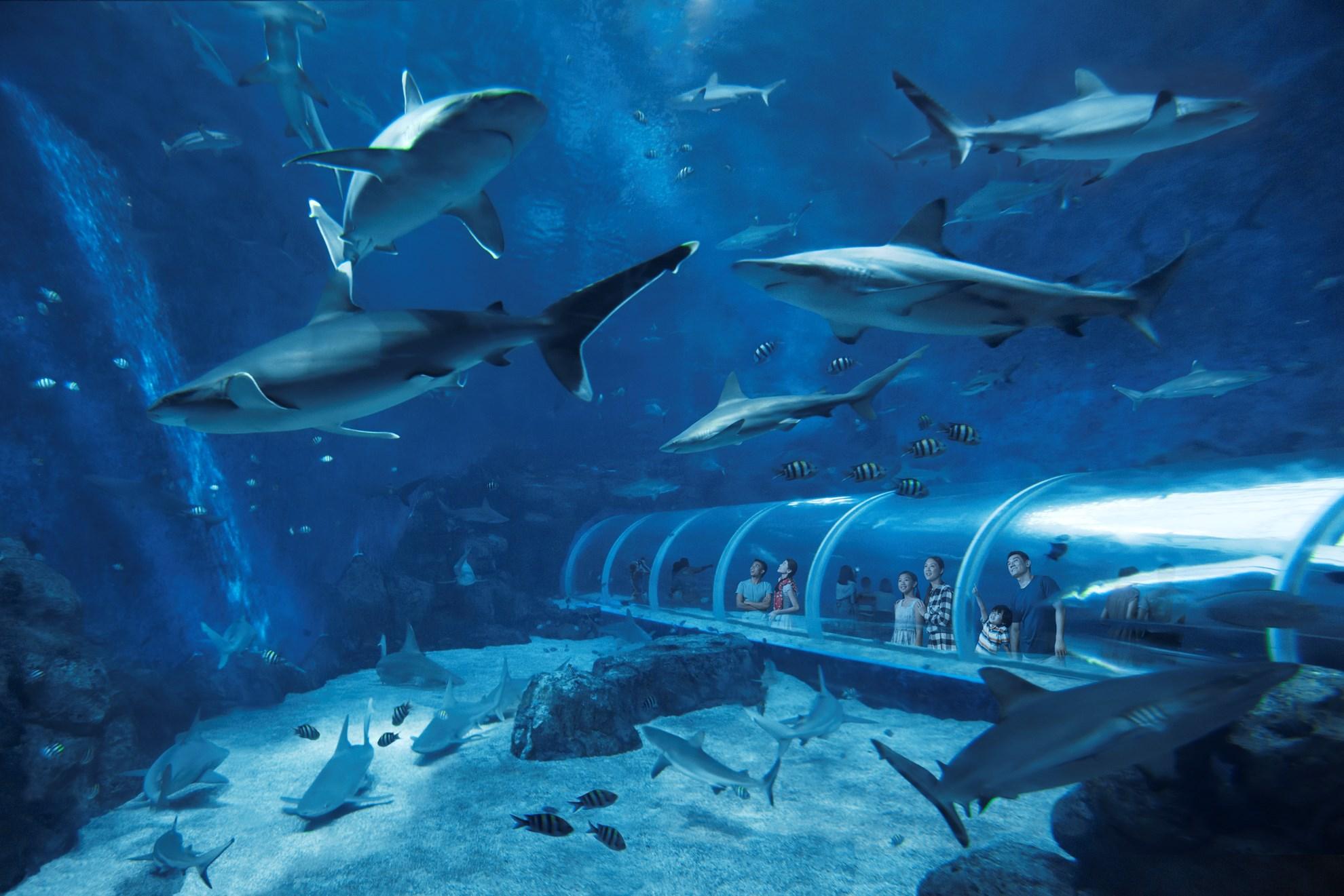 Combo: Vé  công viên nước Adventure Cove Waterpark™ + S.E.A. Aquarium™ - Vé vào cửa + Vé Skyline Luge Sentosa