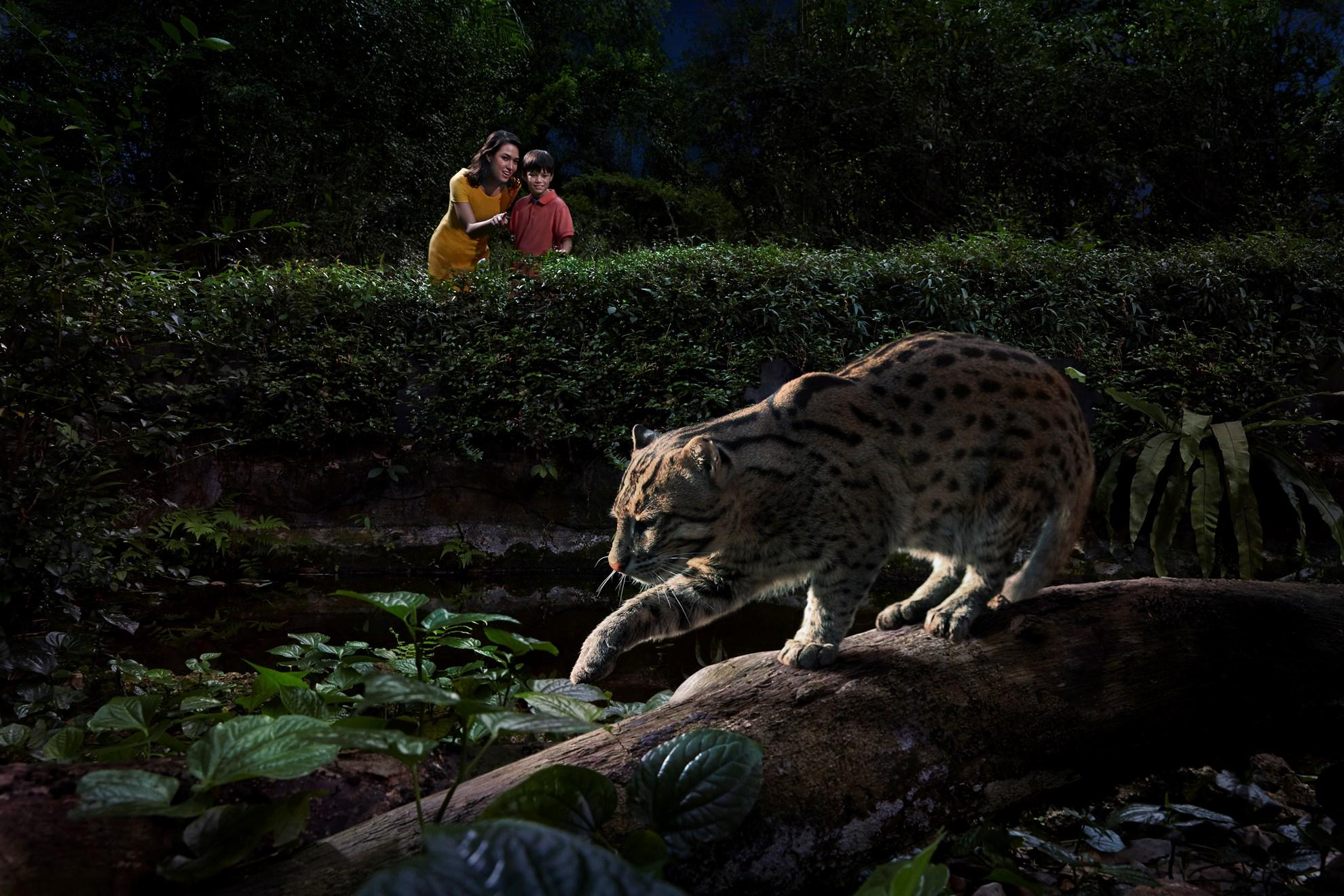 COMBO: Vé Night Safari Singapore + Vé Singapore Zoo + Thẻ EZ-Link Singapore