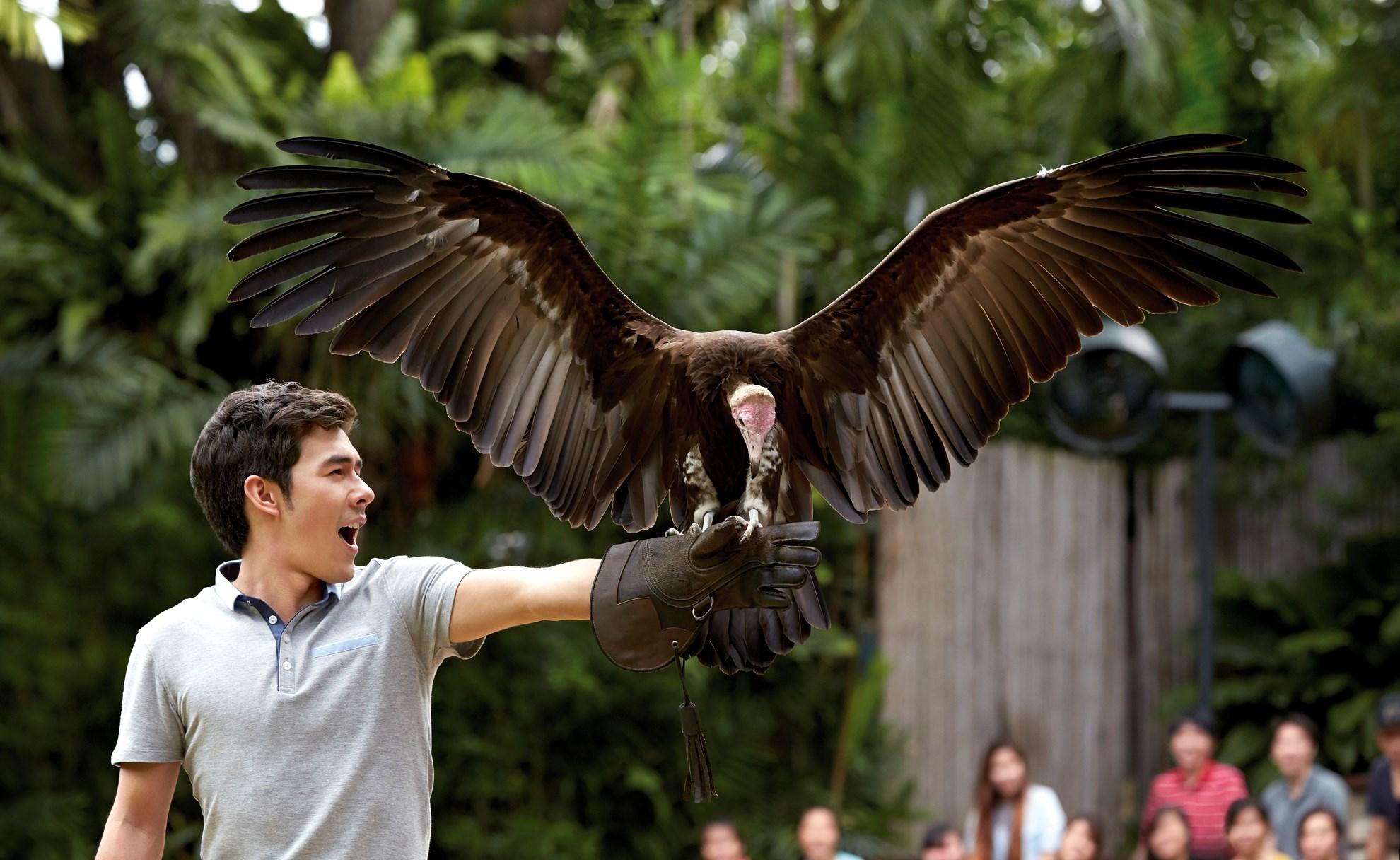 COMBO: Vé tham quan vườn chim Jurong + Rainforest Lumina tại Vườn thú Singapore