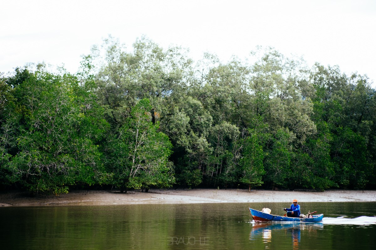 Du ngoạn trên Sông Wetland và Xem Cá heo ở Kuching