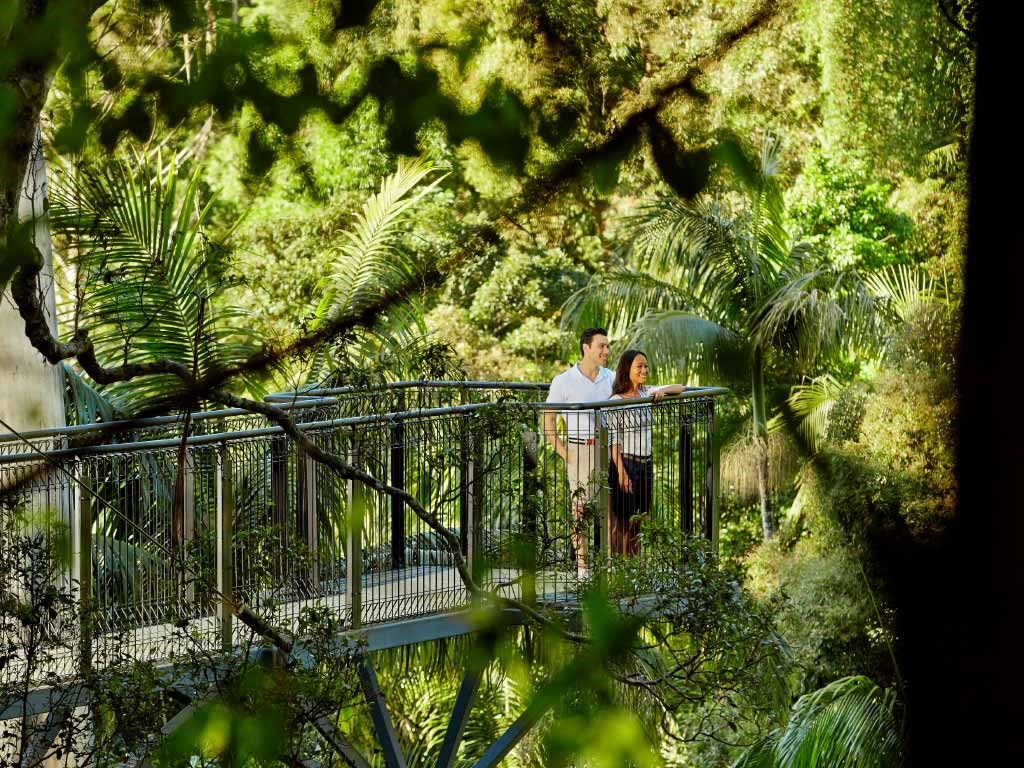 Lamington National Park and O'Reilly Tour from Brisbane
