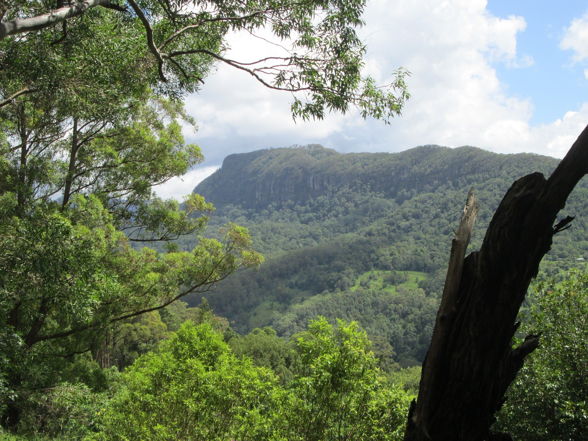 O'Reilly's Green Mountains Tour from the Gold Coast