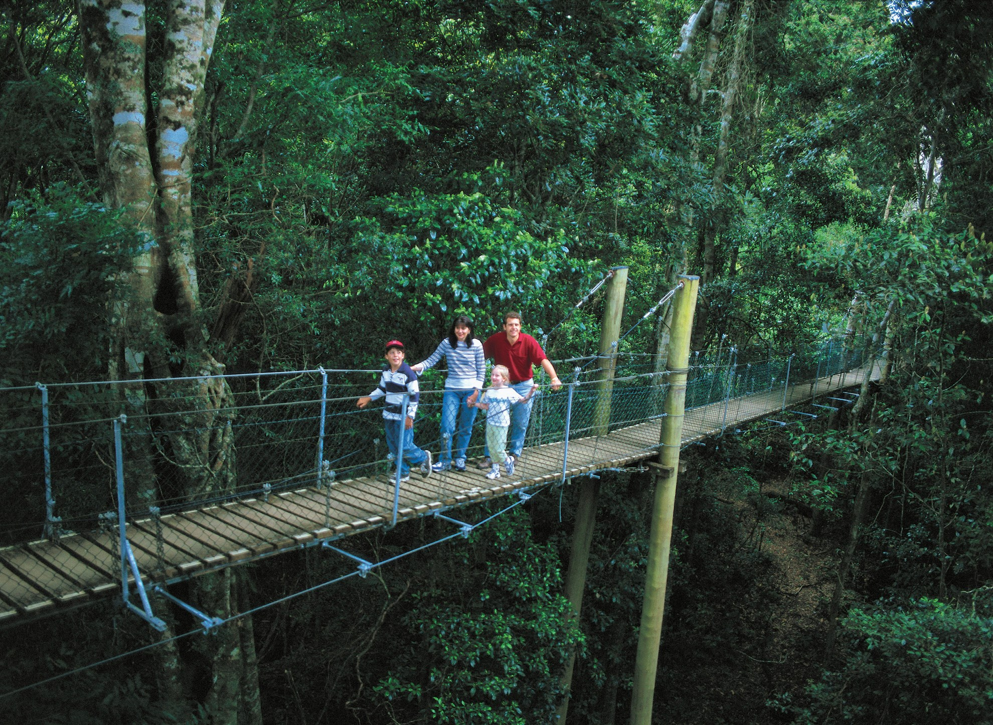 Springbrook National Park and Natural Bridge Tour