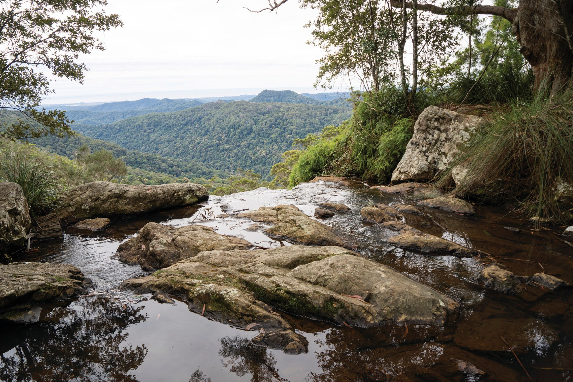 Tamborine Mountain and Lamington National Park 4WD Tour