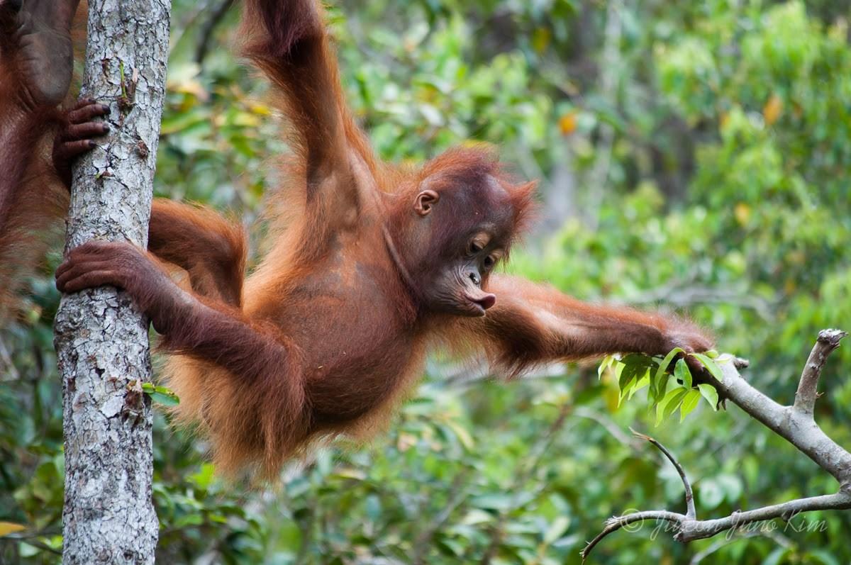 Tour Tham quan Trung tâm Động vật Hoang dã Semenggoh và Làng Văn hóa Sarawak