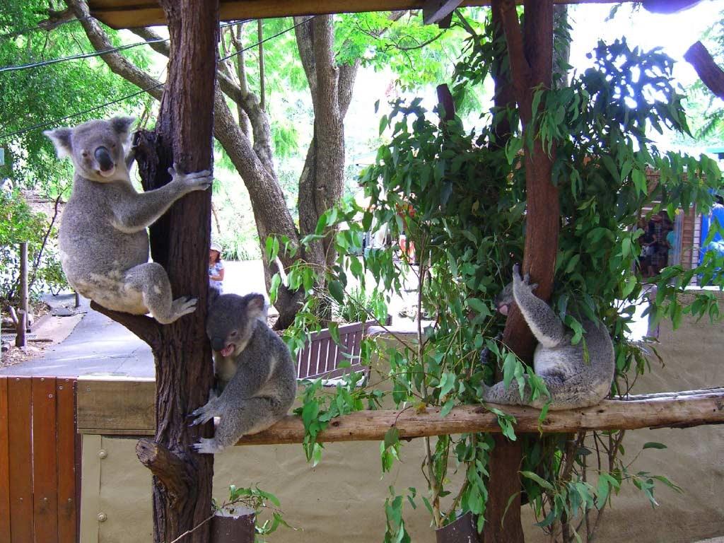 Tour tham quan vườn thú Australia, khởi hành từ Gold Coast