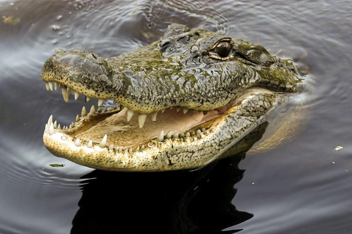 Tour Tham quan Vườn thú Semenggoh, Nhà dài Annah Rais và Trại Cá sấu