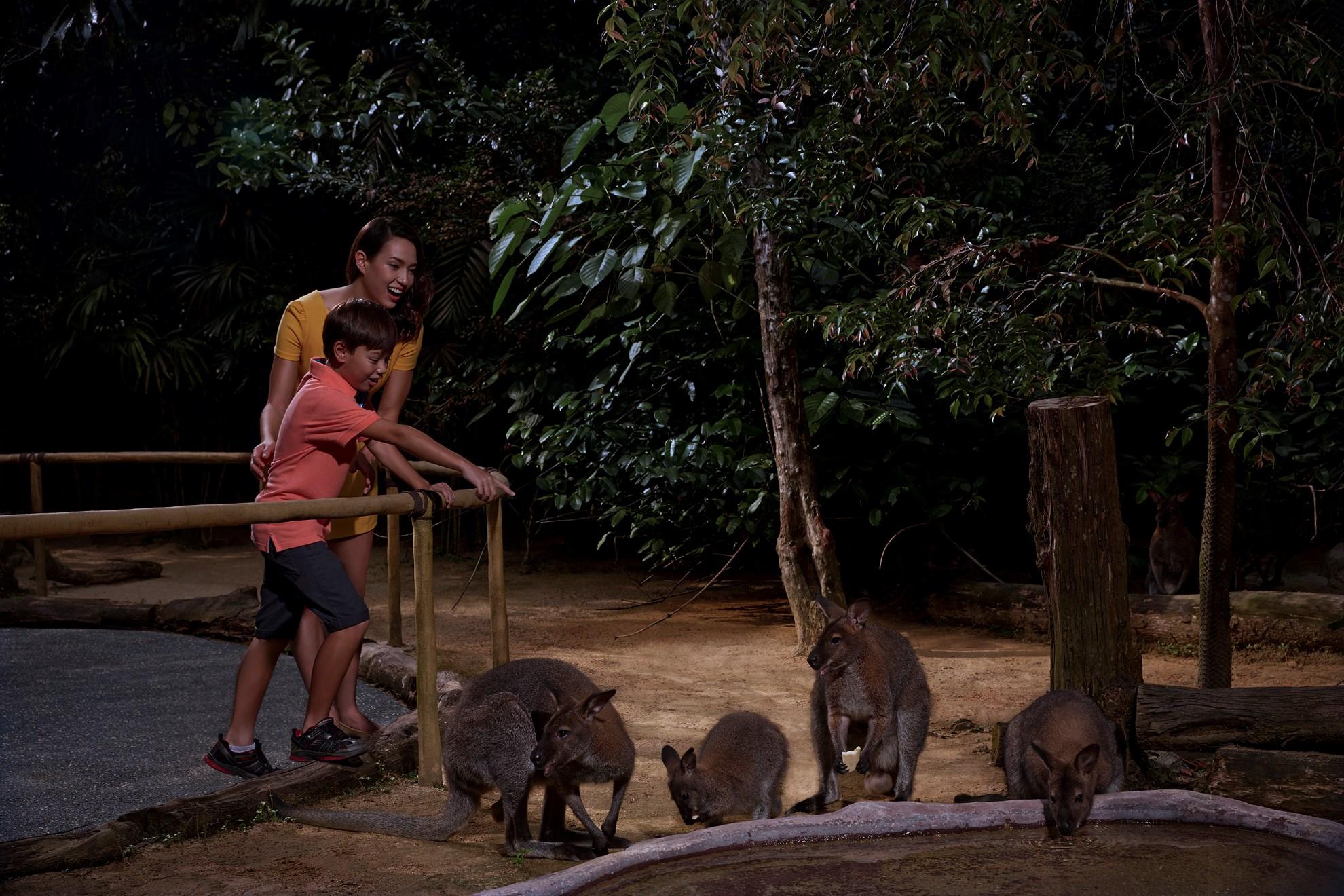 Vé Night Safari Singapore