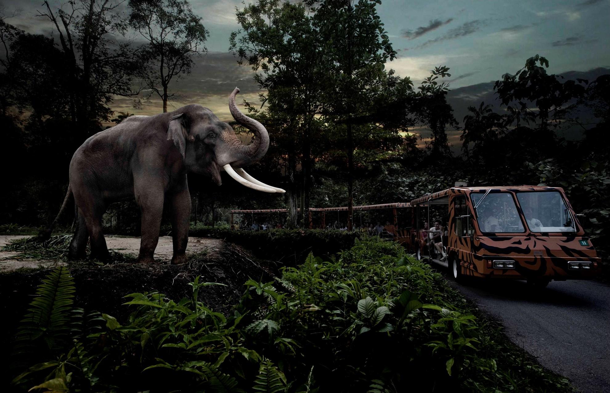Vé tham quan Singapore Night Safari và dịch vụ đưa đón