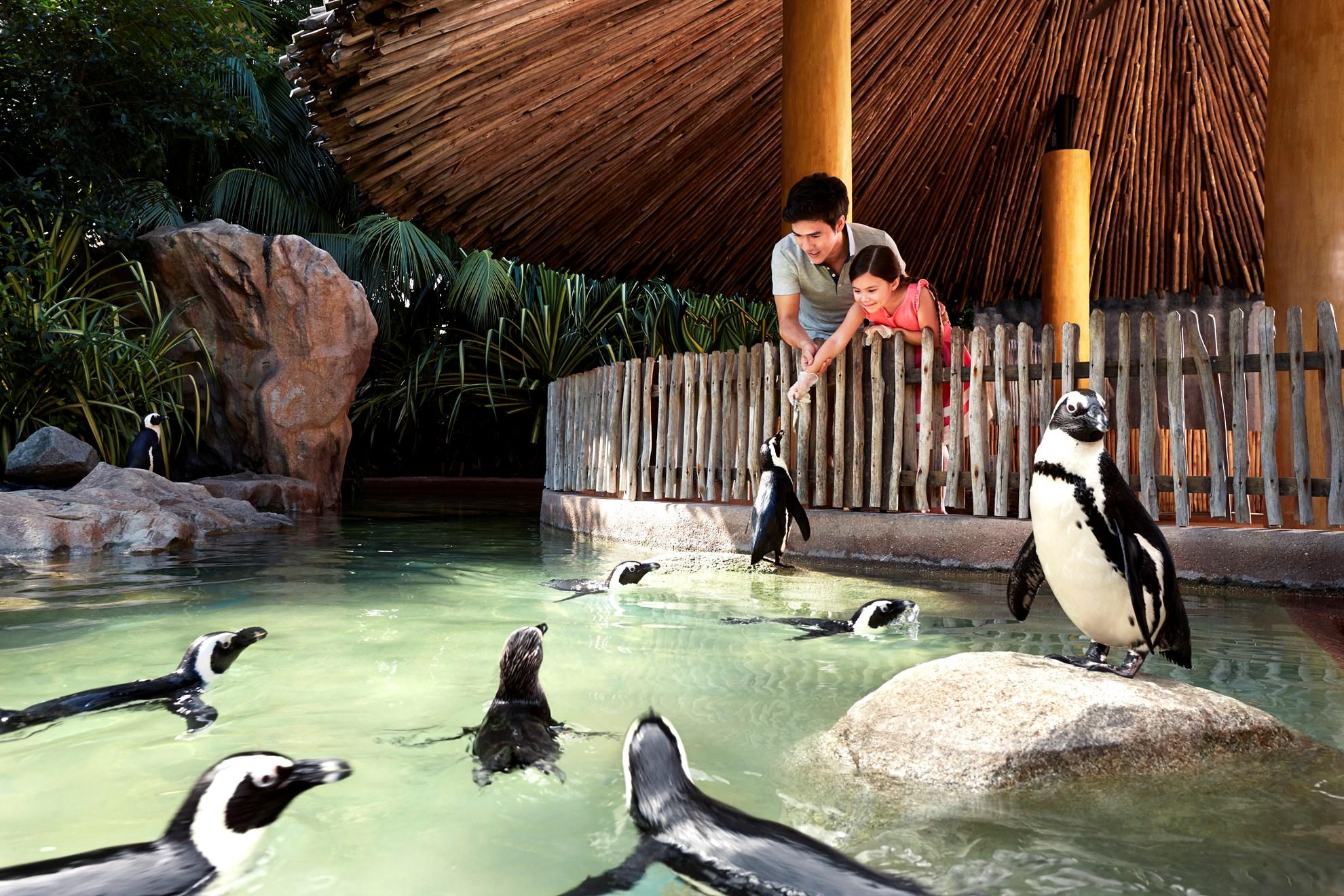 Vé tham quan vườn chim Jurong, có đưa đón
