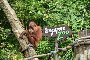 Hình của Vé Singapore Zoo