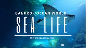 Hình của Vé Sea Life Bangkok Ocean World (Siam Ocean World)