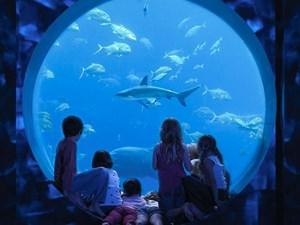 Hình của Thủy cung The Lost Chambers Aquarium